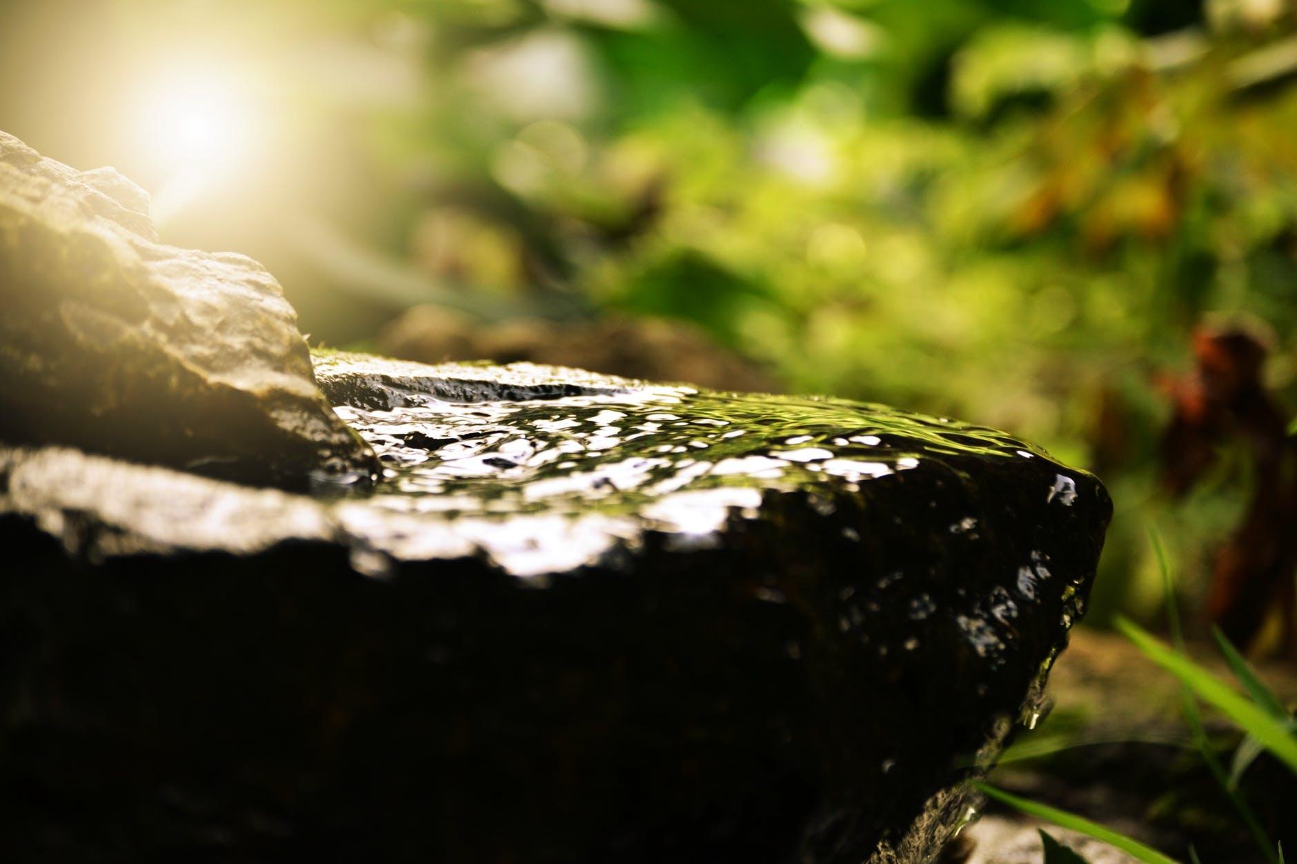 blur calm close up daylight