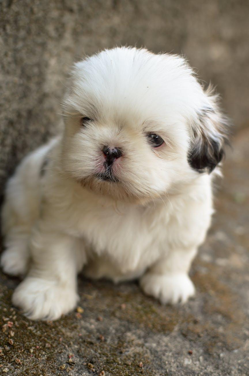 adorable animal blur canine
