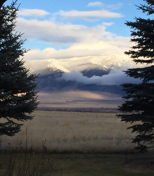 Madison Range between spruce