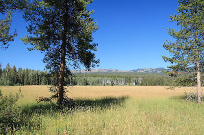 Beautiful_Meadow_in_Yellowstone_National_Park.JPG