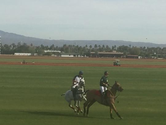 2 polo horses