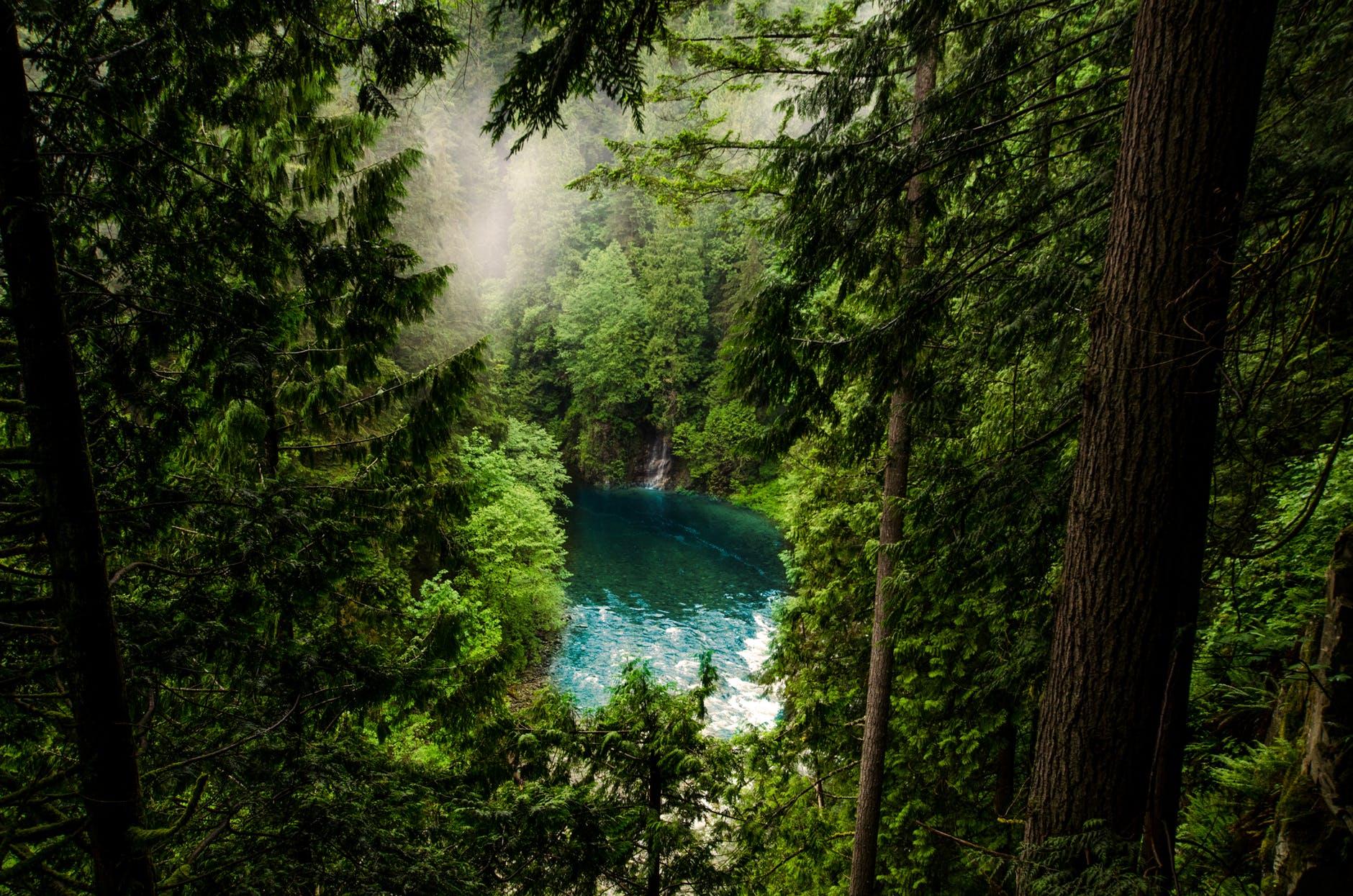 conifer daylight evergreen fog