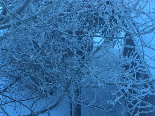 frosty tree.JPG