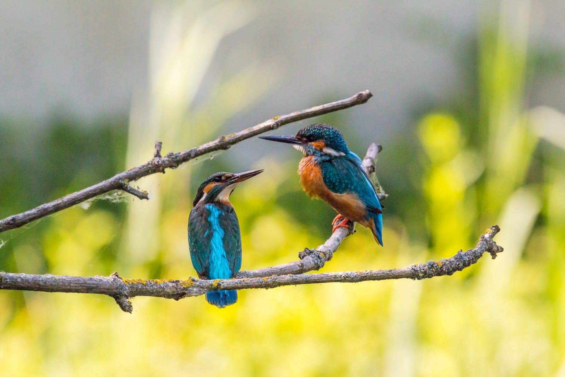 animals avian birds branch