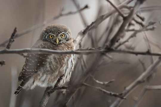 close up photo of owl on tree branch