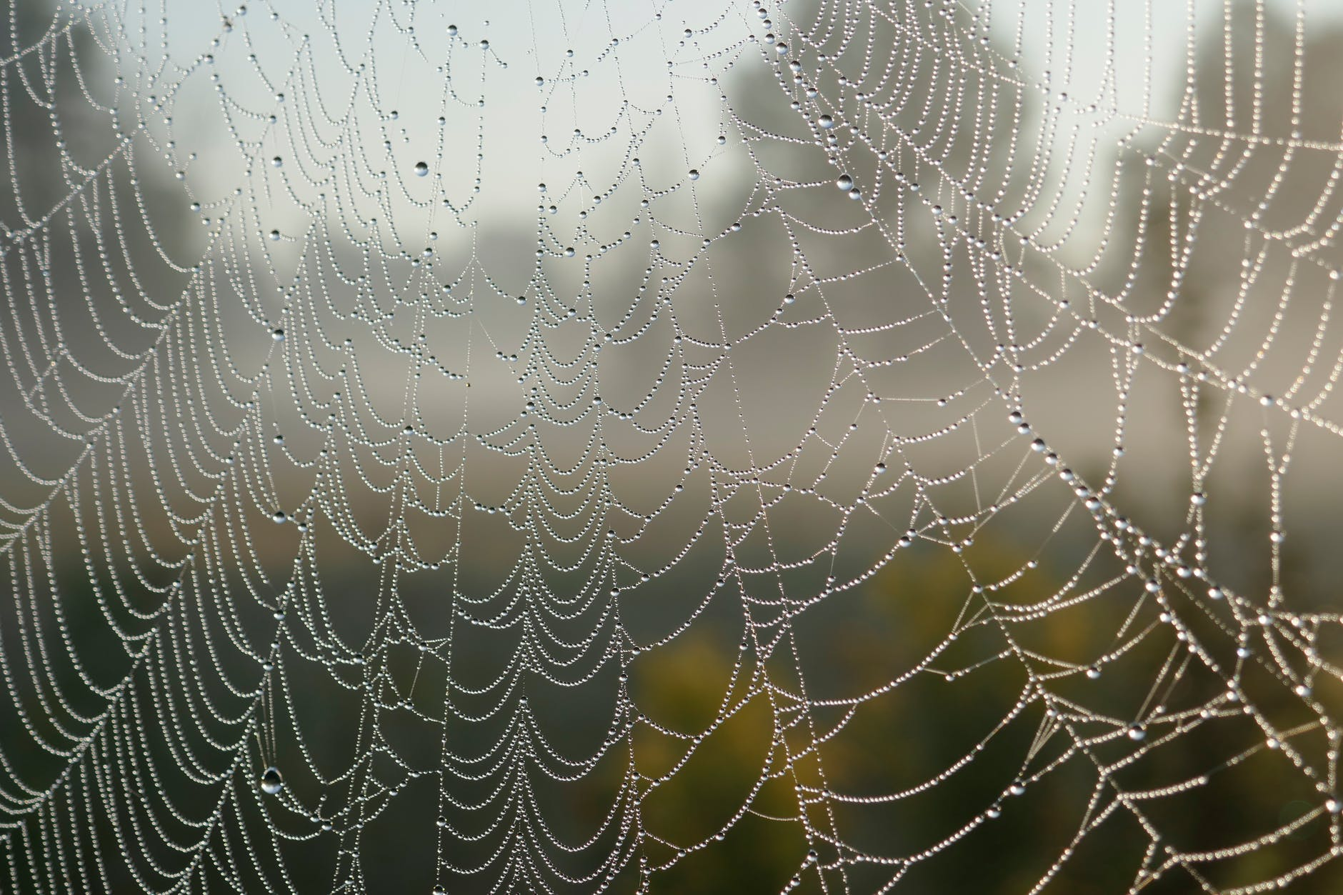 close up cobweb macro pattern