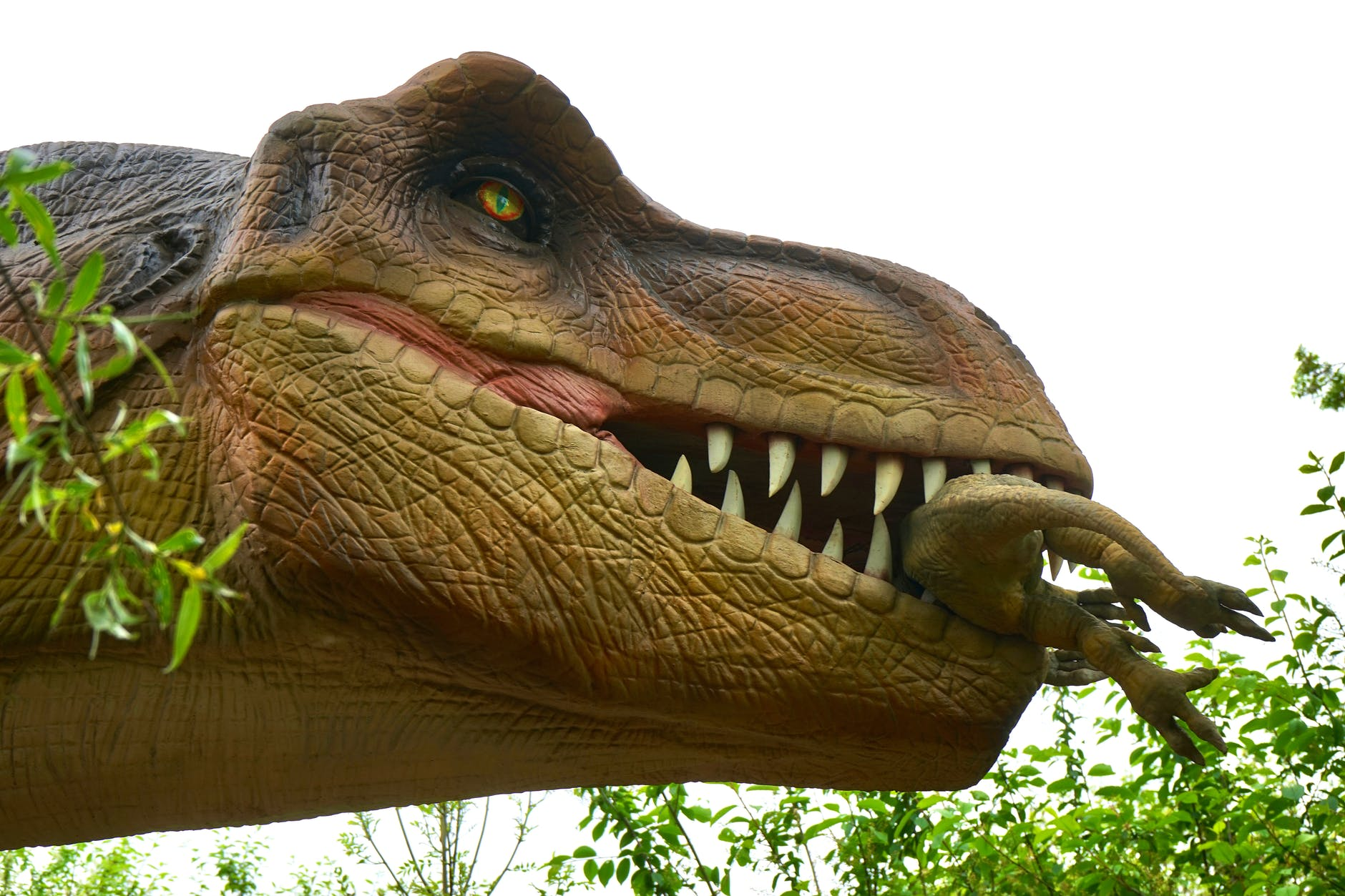 animal beast big carnivore