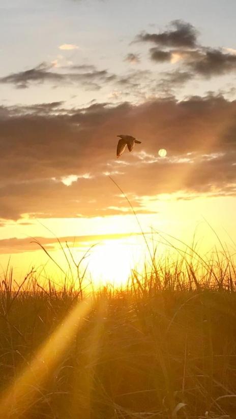 bird in sunset sky