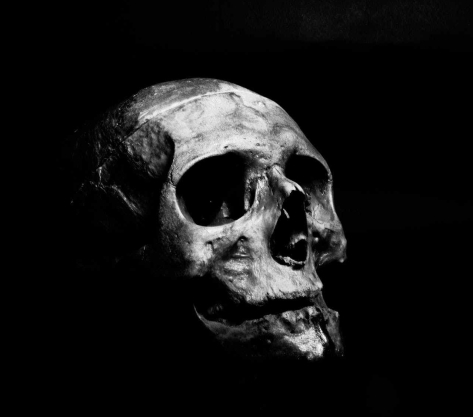 grayscale photography of human skull