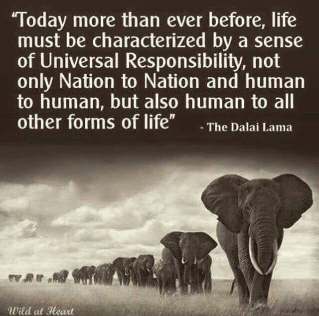 Universal Responsibility.jpg