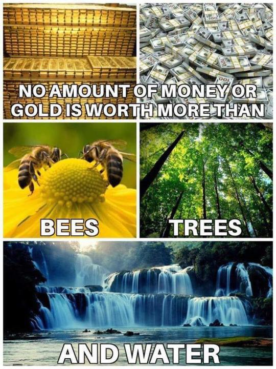 bees trees water
