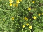 flowers – yellow