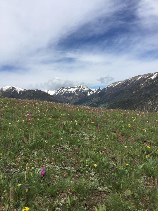 flowers+snow-peaked mtns