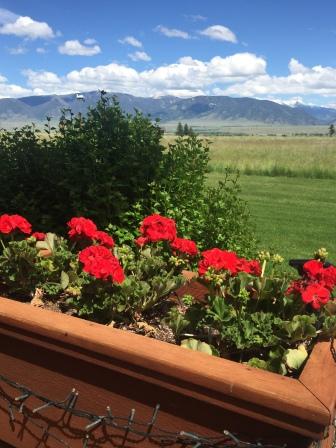 geraniums - Madison Range