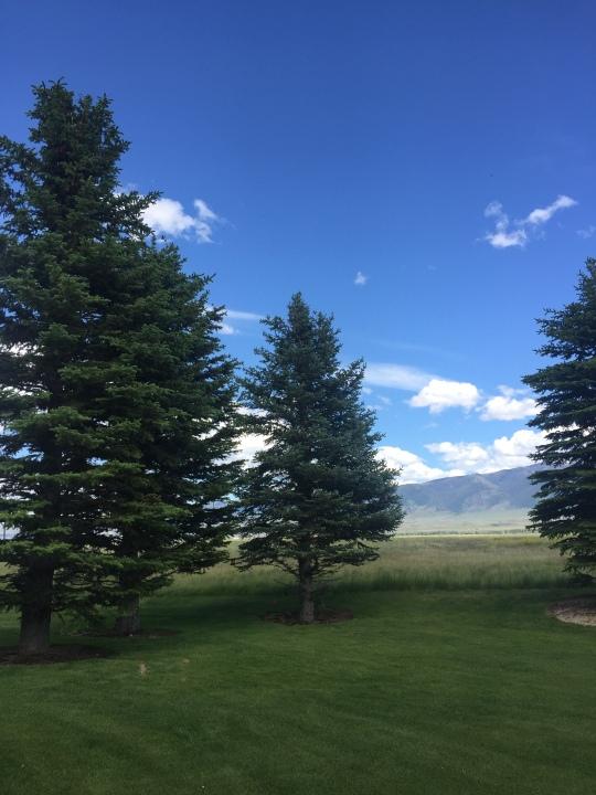 trees -yard-look northeast