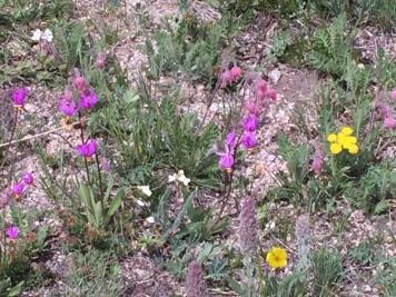 wildflowers -3