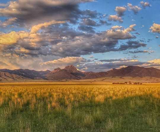 Montana grass:mountains:sky