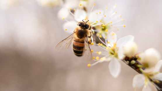 bee perched on white petaled flower closeup photography