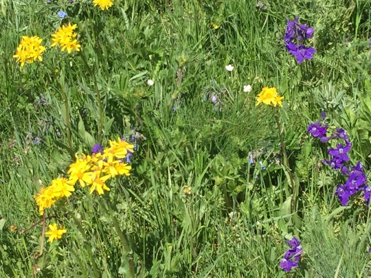 wildflowers in Gravellys