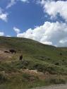 6 bison