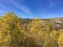 Aspen grove & blue sky