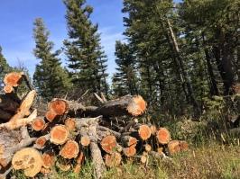 wood stack in Gravelies