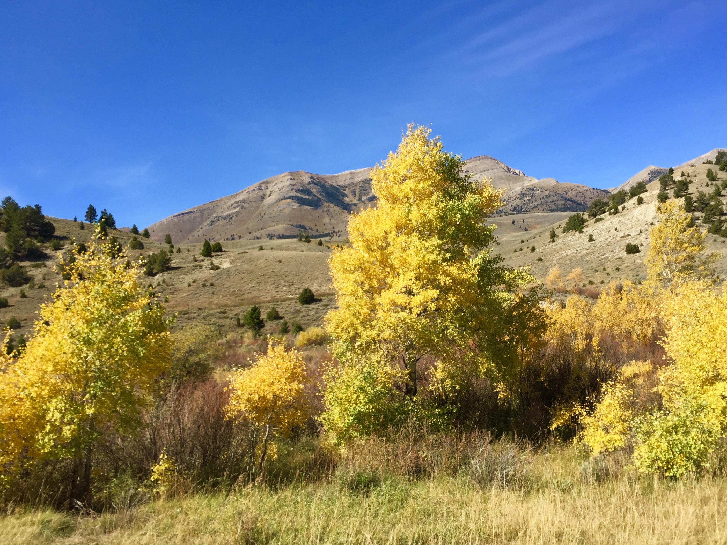Wow - Aspen in Autumn