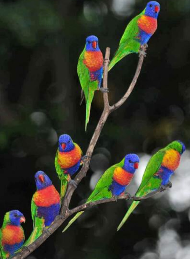 brightly colored birds