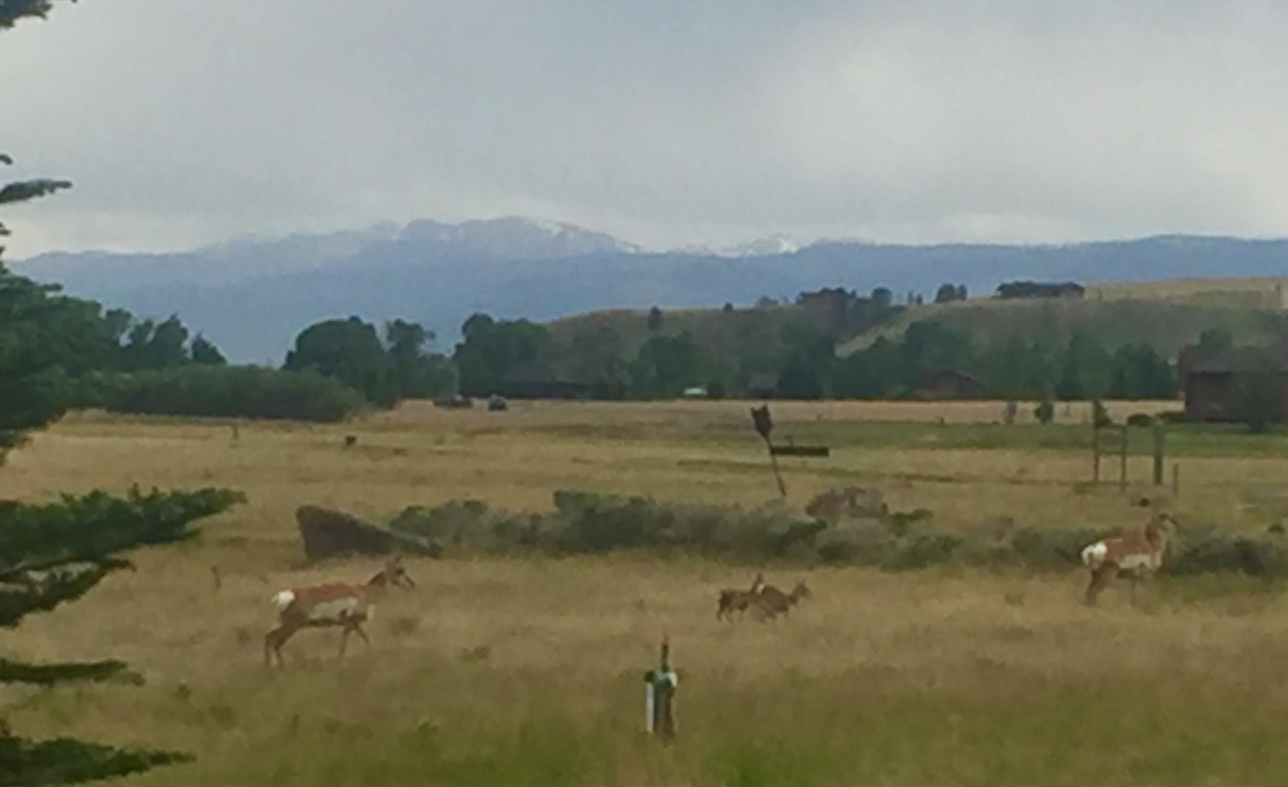 2 does w 2 baby antelope.jpg