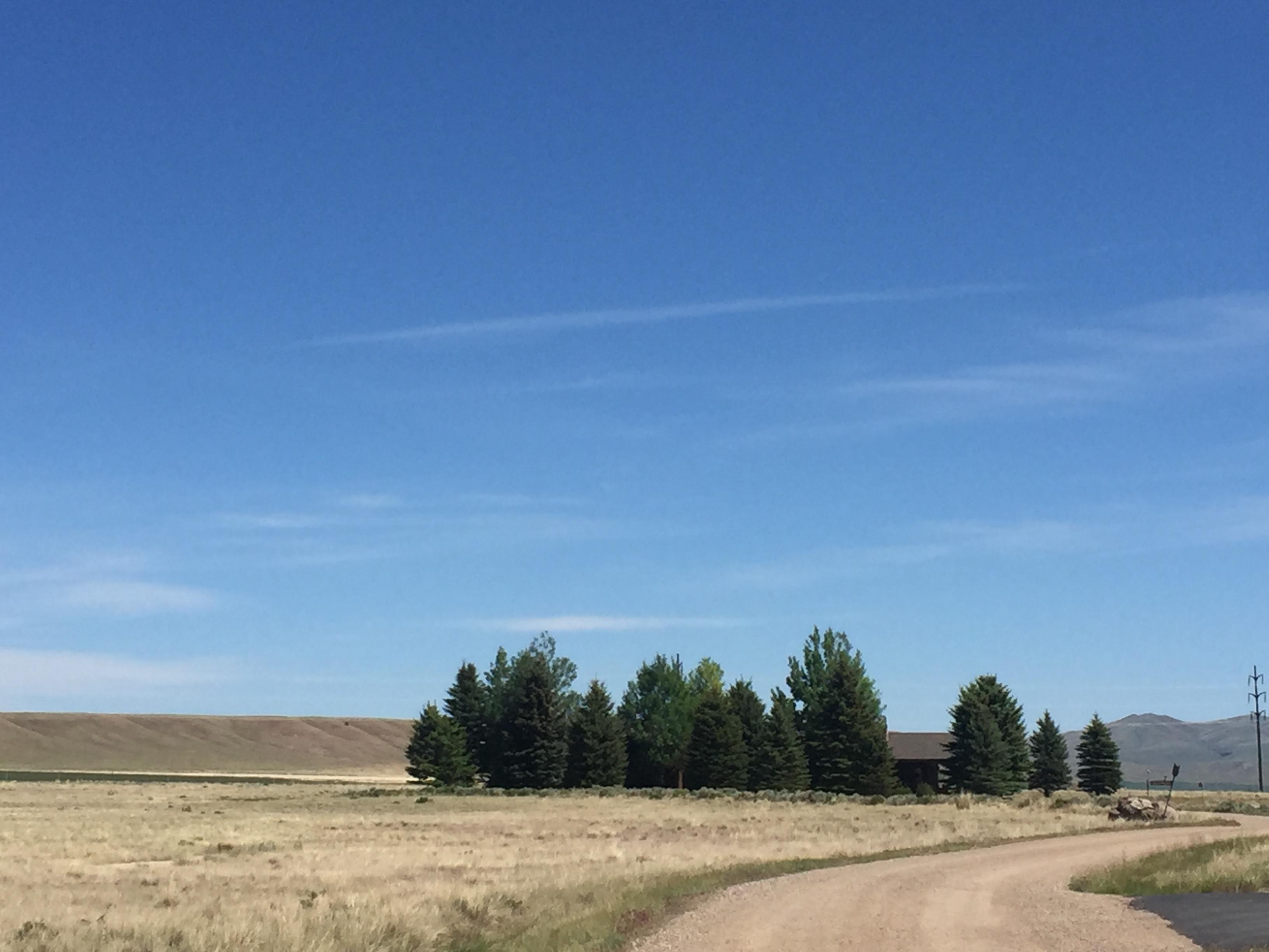 Home - golden field -Mallards Roost.JPG